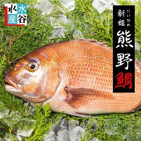 真鯛 活〆 熊野鯛【養殖】送料無料 お祝い事 お食い初めにもどうぞ♪ お刺身 真ダイ 鯛 姿造り 鯛しゃぶ タイの塩焼き