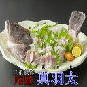ランキング1位獲得商品 送料無料 幻の高級魚 尾鷲 マハタ(1.3-1.5kg) 三重県産 生産量日本一 お鍋 コラーゲン…