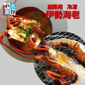 三重県産 加熱用冷凍伊勢海老 1kg入り サイズいろいろ お味噌汁 焼き物 バーベキュー 送料無料