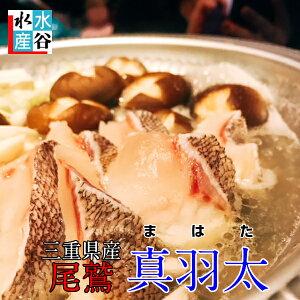 4月月間優良ショップ受賞!ランキング1位獲得商品!お客様評価4.8以上!!送料無料 幻の高級魚 尾鷲 マハタ(1.3〜1.5kg) 三重県産 生産量日本一 お鍋 コラーゲンたっぷり お刺身 お寿司
