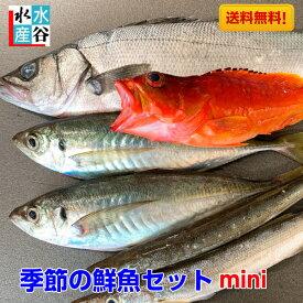 お試し価格!季節の鮮魚セットミニ 海鮮 天然魚 送料無料 三重県
