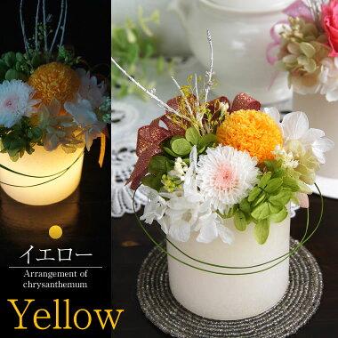 菊のお色は黄色になります。