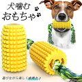 【犬のデンタルケア】遊びながらキレイに!犬用歯磨きおもちゃのお勧めは?