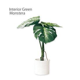光触媒 モンステラ TRL (フェイクグリーン)・小さめサイズの卓上仕様♪CT触媒 観葉植物 人工 水やり不要 害虫 アブラムシ 空気清浄 消臭 抗菌 小さい 玄関 トイレ 棚 インテリアグリーン イミテーショングリーン ミニ