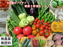 自然農法プラチナ・自然栽培 野菜セット(夏季) Lサイズ(ボリュームの3〜4kg!!)
