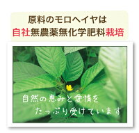 オススメ夏野菜モロヘイヤ。モロヘイヤ100は無農薬有機栽培