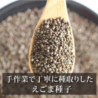 えごま種子