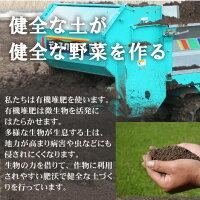 健全な土が健全な野菜を作る