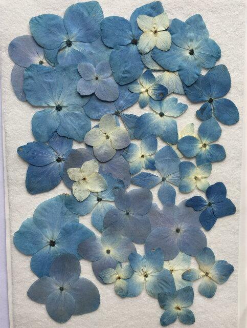 K-63 押し花 アジサイ ブルー ミックス 40枚
