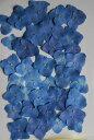 N-02 押し花 アジサイ ブルー 30枚