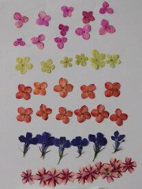 N-09 押し花 小花ミックス 40枚