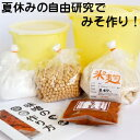 手作り味噌キット 夏休み 自由研究 版 出来上り1.6kg用