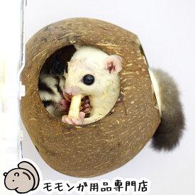 SANKO ココハウス フクロモモンガ用ハウス 三晃商会 サンコー