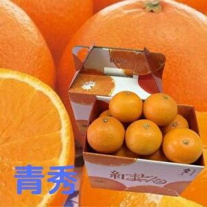 お歳暮 紅まどんな 【青秀】 1.5kg×2(L〜2L)(7〜8個) ふるさと物産品 送料無料!JA愛媛