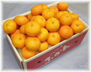 みかん アグリあなん 48個〜60個(5kg) 温室栽培ハウスミカン ふるさと物産品