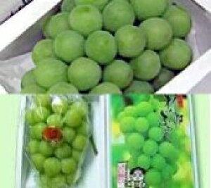 桃太郎ぶどう(2房)とマスカットオブアレキサンドリア(2房) 「岡山特産」 ふるさと物産品
