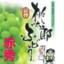 【発送は8月1日から】岡山特産「桃太郎ぶどう(皮ごと食べれる)」 2房:1.4kg以上[赤秀] ハウス栽培 【smtb-kd】