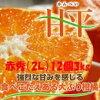 「甘平」愛媛オリジナル品種2L(12個)3kg「赤秀」糖度が高く、平らな形をしていることから、「甘平(かんぺい)」と名付けられました。