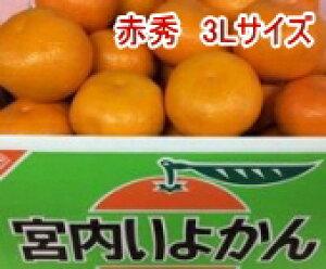 みかん 伊予柑(いよかん)赤秀 3Lサイズ 9kg 愛媛県産