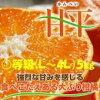 「甘平」愛媛オリジナル品種L〜4L4Kg「〇等級品」3kg「赤秀」糖度が高く、平らな形をしていることから、「甘平(かんぺい)」と名付けられました。