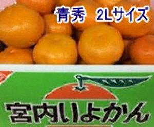 みかん 伊予柑(いよかん)青秀 2Lサイズ 10kg 愛媛県産