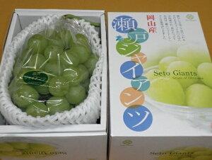 瀬戸ジャイアンツ 【青秀】 1房(800g) ふるさと物産品