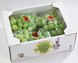 ぶどう 桃太郎ぶどう 【青秀】 3房〜5房(2kg) ふるさと物産品
