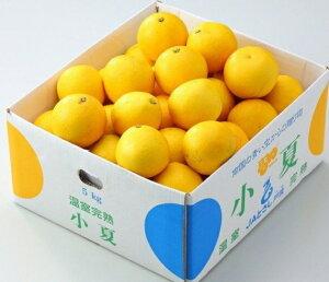 みかん 小夏(ニューサマーオレンジ) L〜2L(約5kg)高知産まっこと旨い!南国の太陽を浴びて育った甘くて新鮮な柑橘
