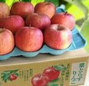 【お歳暮2020フルーツ】葉とらず太陽ふじりんご (36〜40個) 10kg サンふじ ふるさと物産品