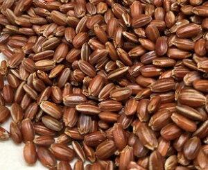 ☆国内産 赤米♪(1kg)ふるさと物産品