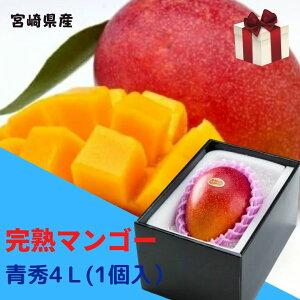 完熟マンゴー 【青秀】 4L(約510g以上×1個) 「情熱みやざきブランド!」 ふるさと物産品