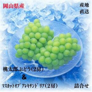 桃太郎ぶどう(2房)とマスカットオブアレキサンドリア(2房) 「岡山特産」