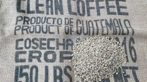 グァテマラ SHB  1kg    (コーヒー生豆)