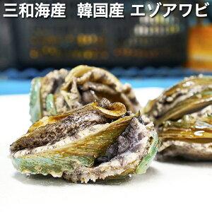 三和海産 韓国産 エゾアワビ 約80g-89g 10枚 【蝦夷鮑、あわび、鮑、鰒、蚫】