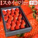 スカイベリー 苺 いちご ふぞろいの苺たち 約650g /栃木県産 スカイベリー いちご 送料無料   苺 イチゴ お祝い 食べ…
