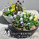 【送料無料】【クーポン利用で30%OFF】季節の花壇苗アソート(パンジー・ビオラ)|苗 アソート 詰め合わせ 花 華 は…