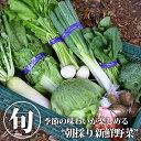 【送料無料】【クーポン利用で30%OFF】【江戸時代から続く伝統農業】松本農園から直送☆旬の野菜詰め合せ 詰め合わ…