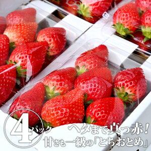【送料無料】とちおとめ(ゆいファーム)|いちご イチゴ 苺 とちおとめ 果物 くだもの フルーツ 4パック セット 詰め合わせ 国産 栃木県産 栃木産 【WS】