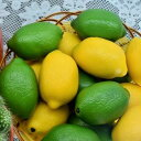 食品サンプル レモン 果物 イエロー グリーン 2色 計10個セット