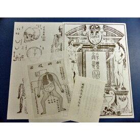 蔵志の解剖図 解体新書の解剖図 解体新書蛮名抜粋 レプリカ
