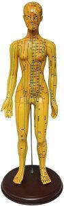人体模型 ツボ 針灸 鍼灸経穴模型 経絡 モデル 整体 マッサージ 学習用 52.5cm 女性 ソフトビニール タイプ