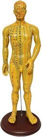 人体模型 ツボ 針灸 鍼灸経穴模型 経絡 モデル 整体 マッサージ 学習用 52.5cm 男性 ハード タイプ