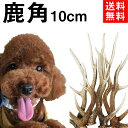 【 10cm 小型犬 】鹿の角 犬 おもちゃ 無添加 おやつ エゾジカ 国産 鹿 角 ガム デンタルケア monolife
