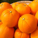 越冬完熟ネーブルオレンジ 家庭用5kg箱 静岡県三ヶ日産 産地直送 送料無料 みかん 柑橘類