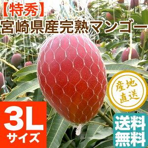 母の日 ギフト 特秀 宮崎 マンゴー 贈答用3L〜4Lサイズ1玉 500g以上 送料無料 宮崎県産 フルーツギフト