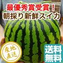 最優秀賞受賞 大玉 すいか 植木スイカ 1玉 Lサイズ6〜7kg 熊本県植木産 送料無料 人気 ギフト フルーツギフト