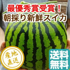 最優秀賞受賞 大玉 すいか 植木スイカ 1玉 Lサイズ6〜7kg 熊本県植木産 送料無料 母の日 ギフト