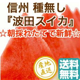 高級 信州波田 種無しスイカ 大玉1玉 家庭用 約7〜9kg 長野県松本産 送料無料 予約販売