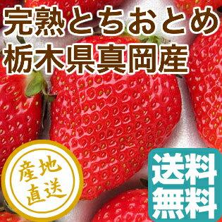 完熟 とちおとめ [2パック入り箱] 栃木県真岡産 送料無料 いちご