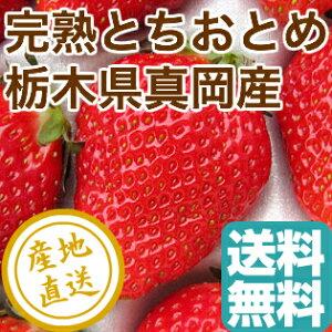 完熟 とちおとめ 2パック入り箱 栃木県真岡産 送料無料 いちご 産地直送